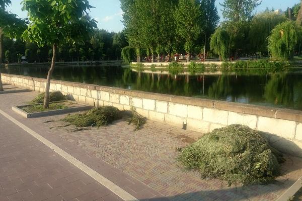 Тернопільський став нарешті очищають (Фото)