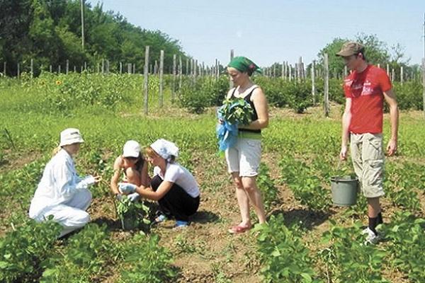 На Тернопільщині є можливість попрацювати сезонно