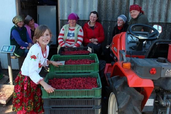 «Мрія» за 2016 рік інвестувала в кооперативний рух Тернопільщини 575 тисяч гривень