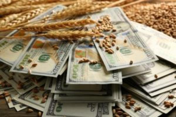 Зерно, вирощене на Тернопільщині, продадуть за кордон?