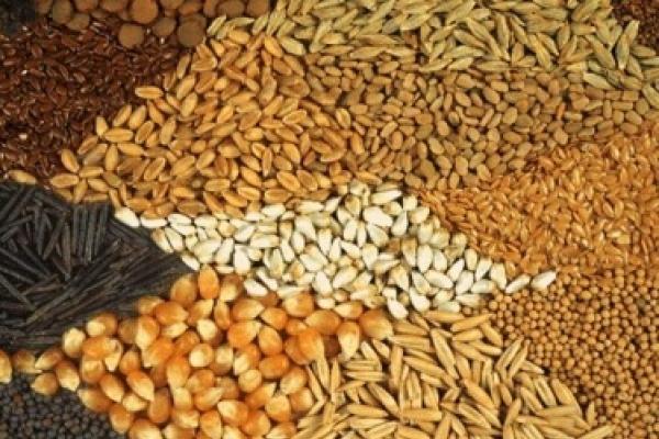 Тернопільщина – серед лідерів зі збору зернових