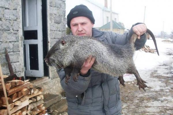 Біля Тернополя прижились три види невибагливих звірів
