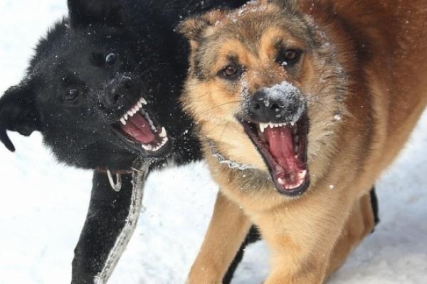 В Тернополі пробували вирішити проблему з розмноженням бродячих псів (Відео)